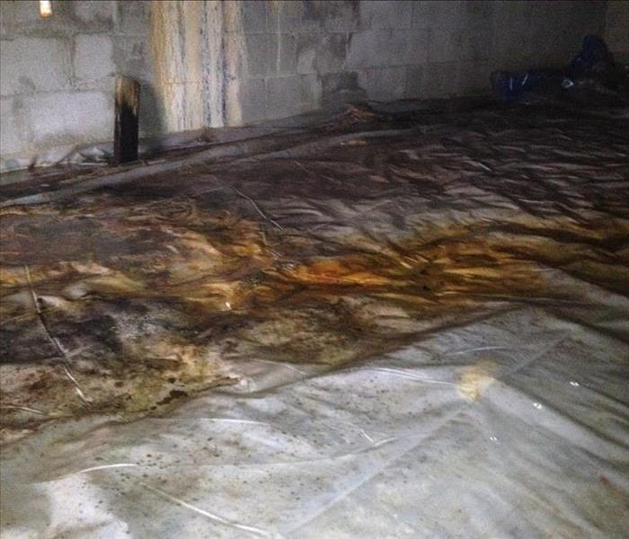 Have mold in your crawlspace? We're here to help!