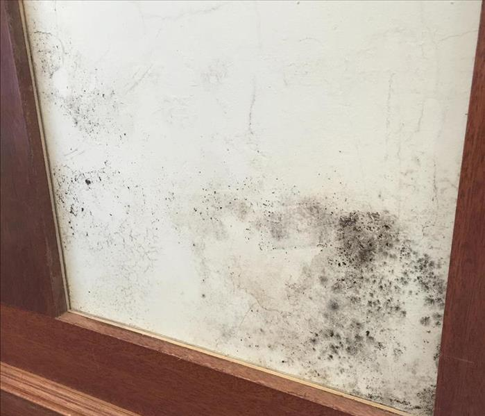 Mold in your office?