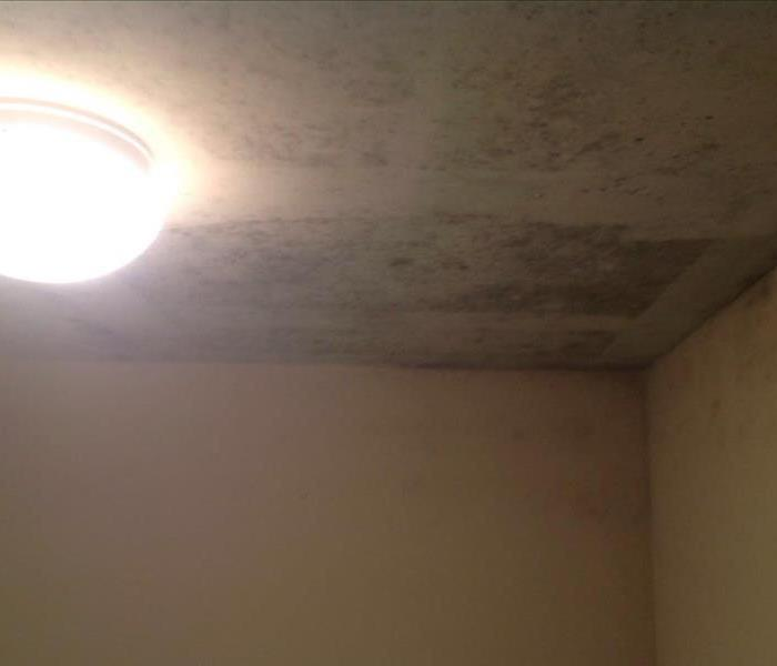 Water leak in ceiling turns to mold