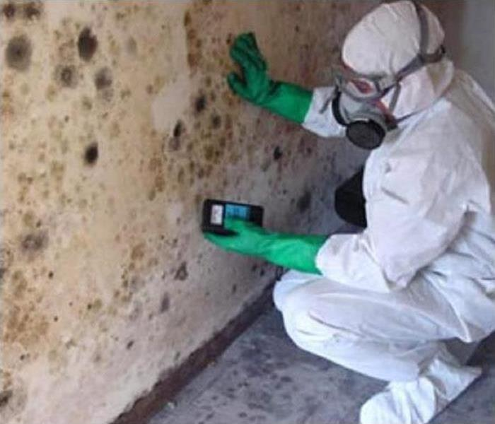 Mold Remediation Why You Need To Consider Mold Remediation