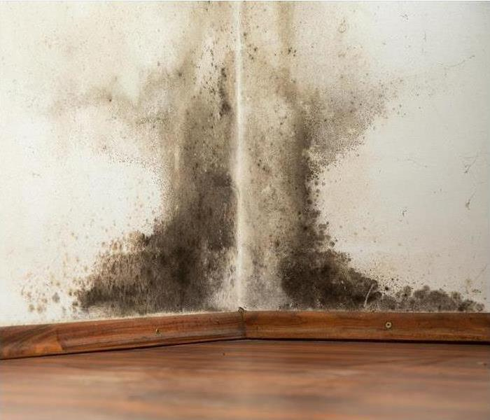 Mold Remediation Does Your Cape May County Home Have a Mold Problem?